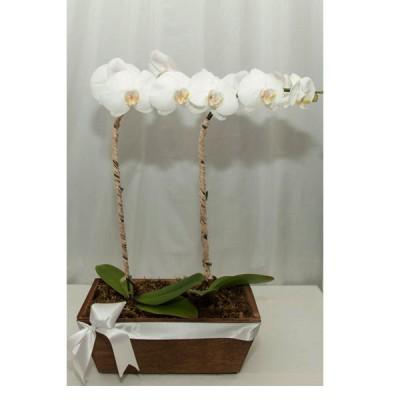 Arranjo com duas Hastes de Orquídeas