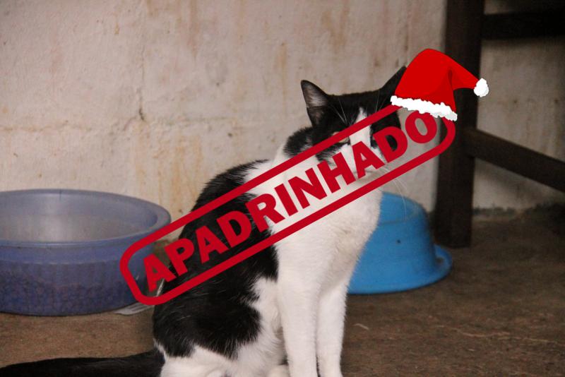 Natal Feliz para o Hector