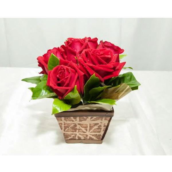 Cachepô com Rosas